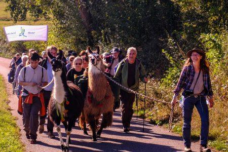 Zwei Lamas öffnen die Herzen: Tierische Verstärkung für die Klimapilger